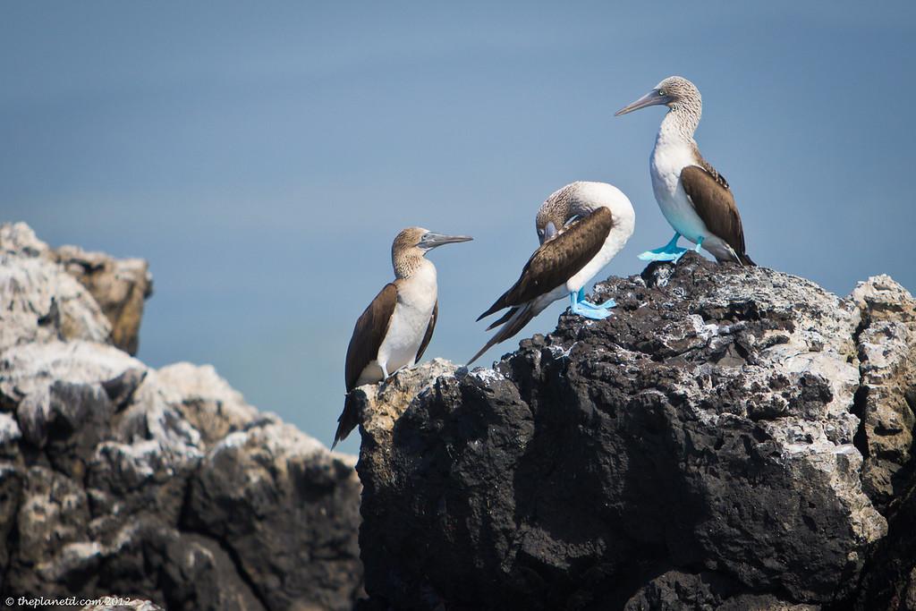animal photos galapagos islands