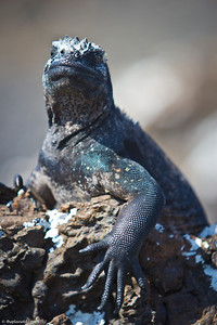 galapagos-wildlife-7