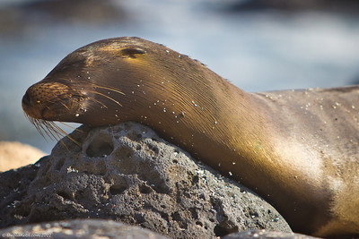 galapagos-wildlife-2