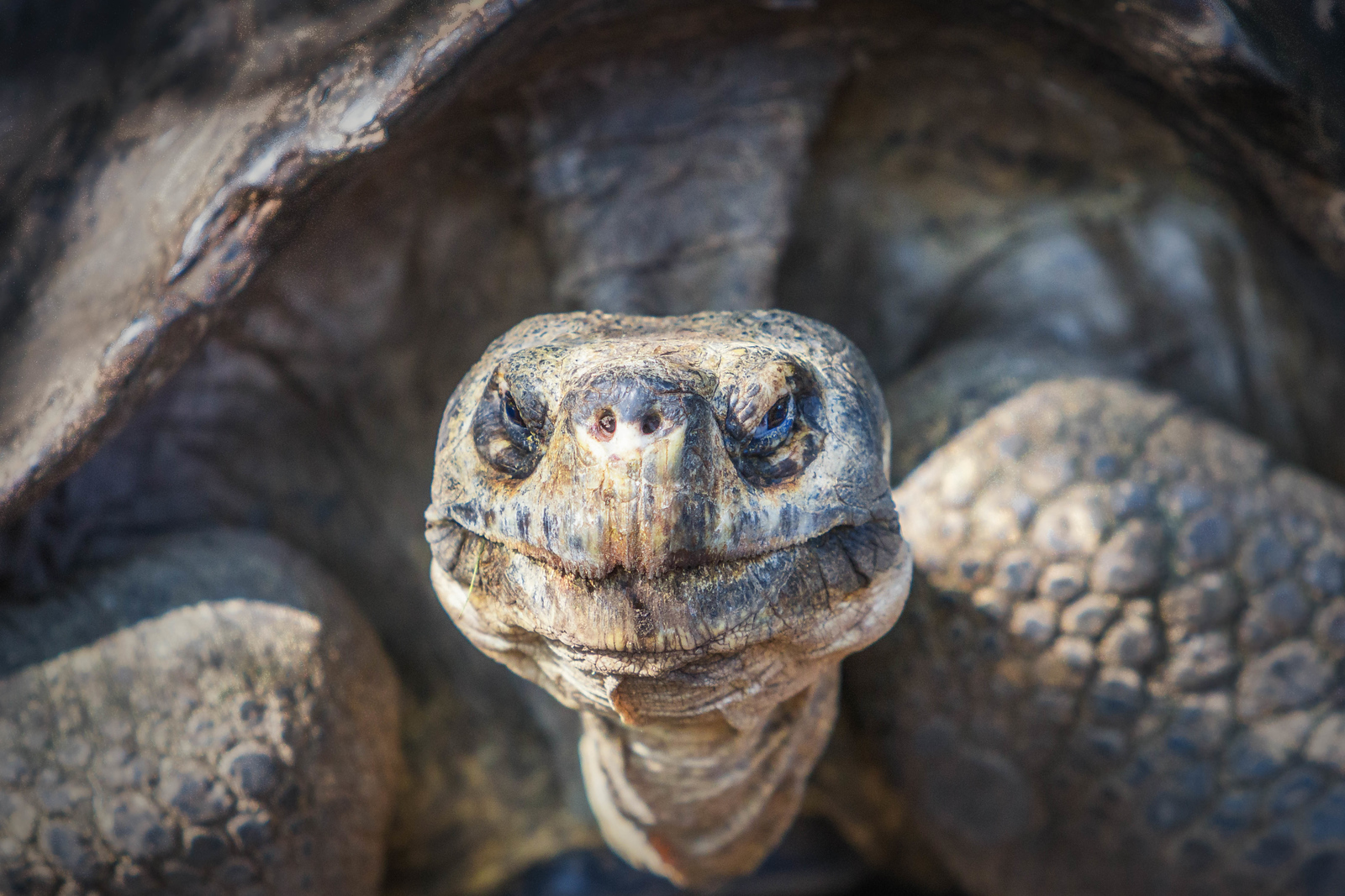 The Galapagos Tortoise is something not to miss.