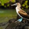 Trip to Ecuador and Galapagos Islands