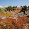 Isla Plaza Flora