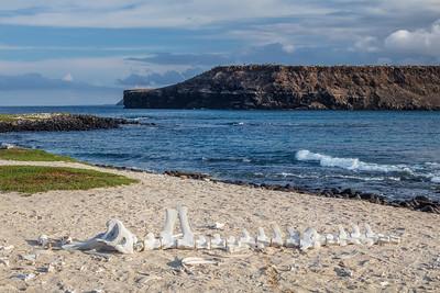 dolphin skeleton Mosquera Islet