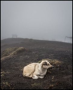 Dog waiting for handouts, Pacaya volcano