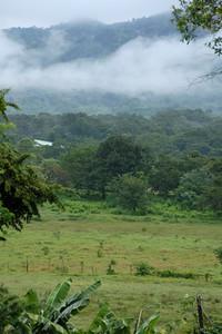 Cloud forest...