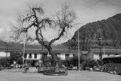 Ollantaytambo Tree