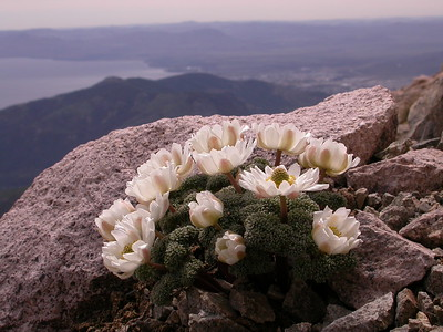 Northern Patagonia I