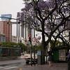 Ar 0011 Buenos Aires met Jacaranda mimosifolia