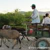 Donkey Cart - Vallemi, Paraguay