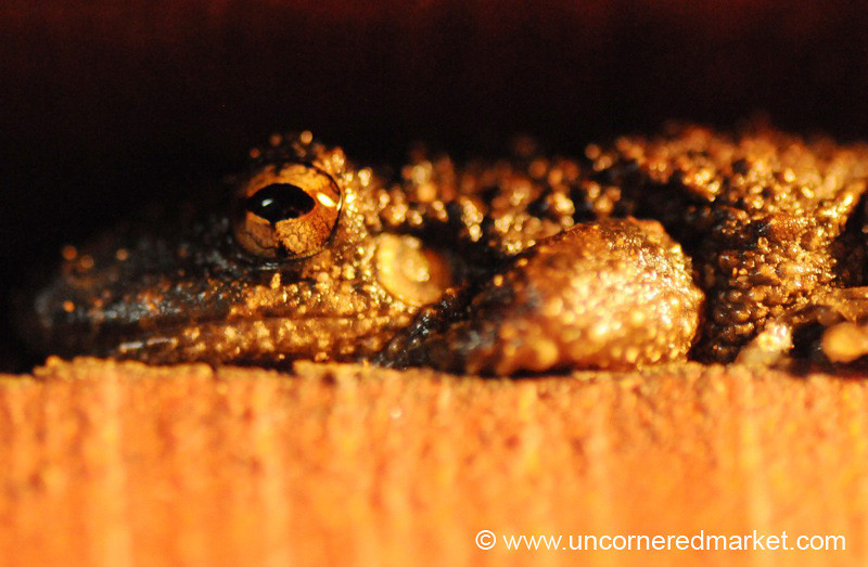 Up Close With a Frog - Concepcion, Paraguay