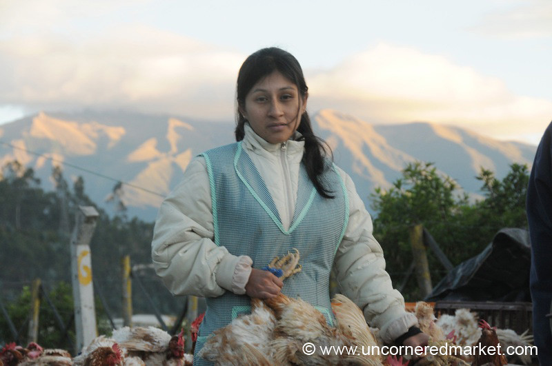 Two Chickens for $7 - Otavalo Market in Ecuador