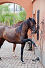 Peruvian Horse Ranch