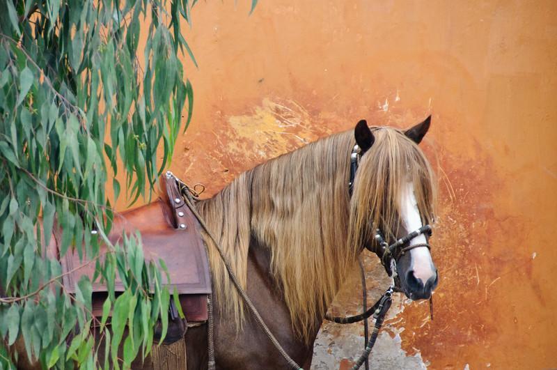 Horses, Peruvian Horse Ranch
