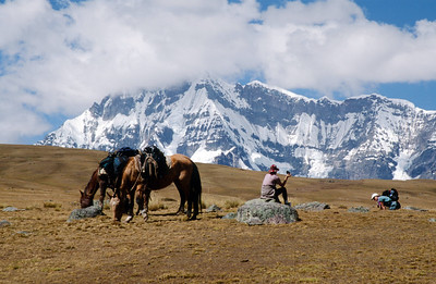 Trail horses with Mount Ausangate in background, Mount Ausangate circuit