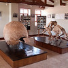 Pikillaqta<br /> Before exploring the ruins, we stop briefly at the small museum at the entrance to see the skeleton and armor of an Ice Age dinosaur - a Gliptodonte (giant armadillo).