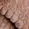 Pikillaqta<br /> Detail of the bone segments (scutes) that form the protective armor of the gliptodonte.