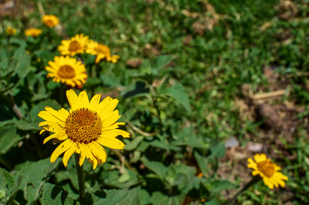 Yellow little flowers