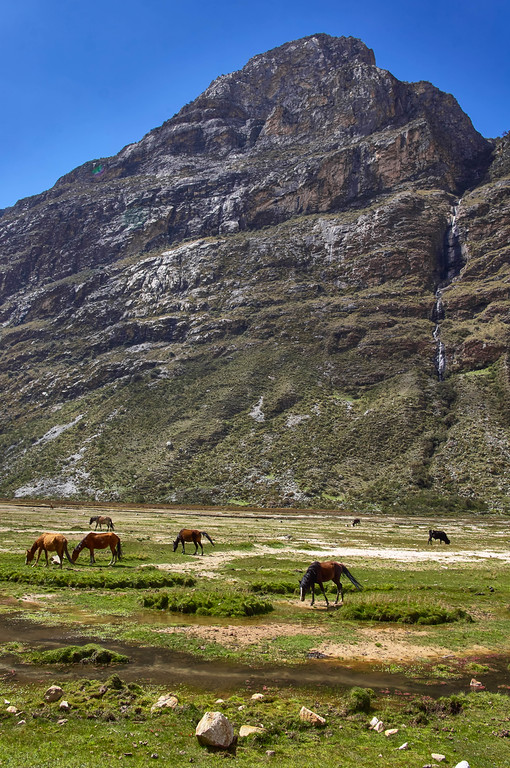 Horses at Huascarán National Park in Peru