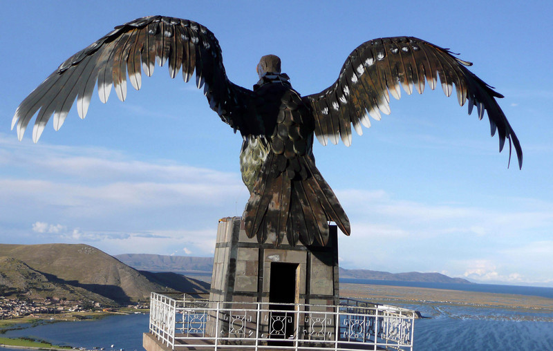 Condor in Puno