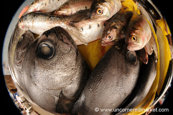Fisheye Fish - Lima, Peru
