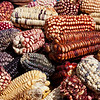 Pisac - Local Market<br /> Just some of the hundreds of types of corn grown in Peru.