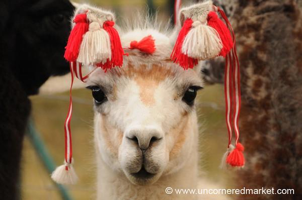 Llama Accessories - Huancavelica, Peru