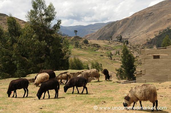 Pastoral Scene in Yauli, Peru