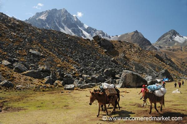 Heavy Loads - Day 2 of Salkantay Trek, Peru