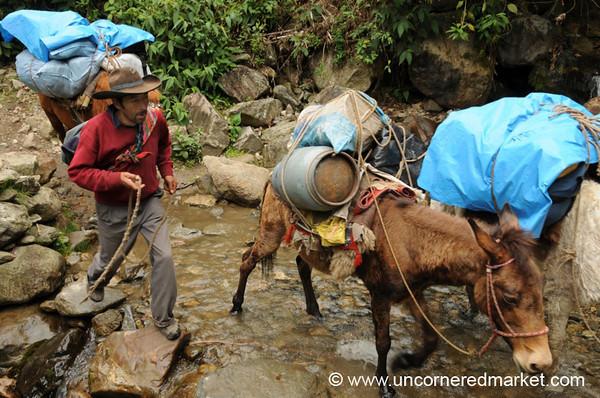 Sabastian With the Horses - Day 3 of Salkantay Trek, Peru