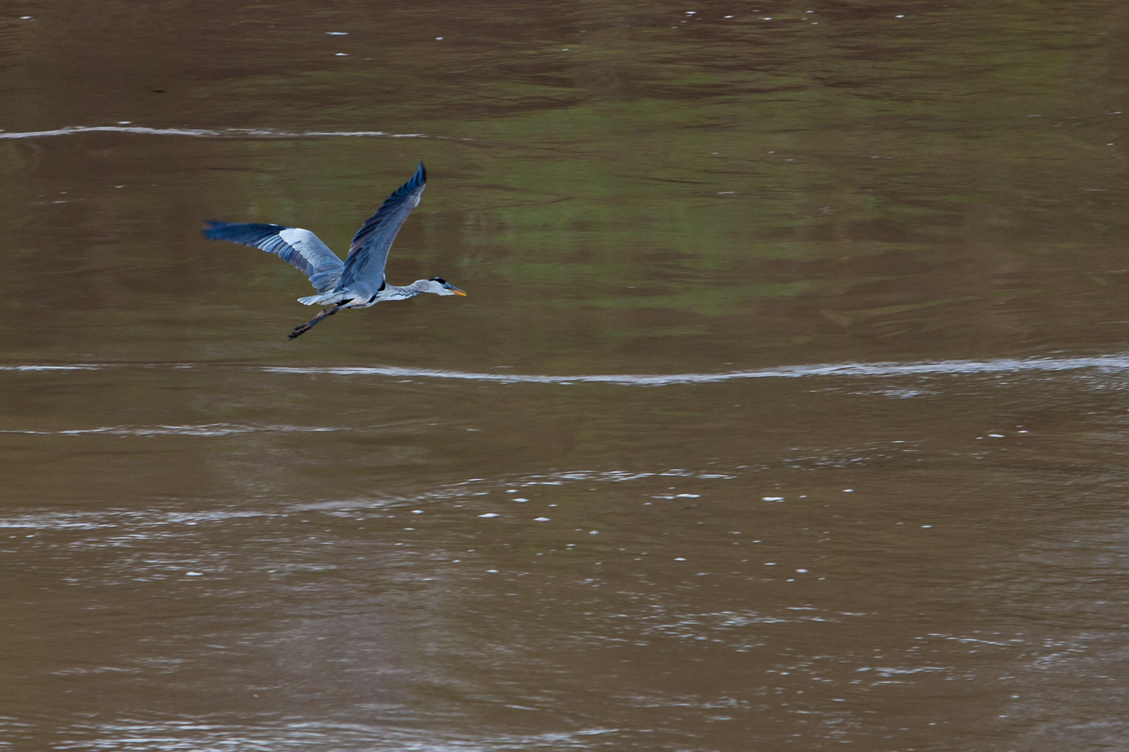 Taking flight over the Amazon River
