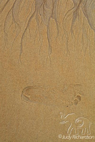 Golden Footprint