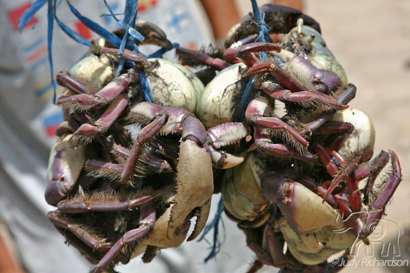 Bundle of Crabs!
