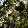 Pa 0013 Botanische Tuin, Buenos Aires