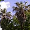 Pa 0015 Botanische Tuin, Buenos Aires