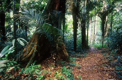 Central Suriname Nature Reserve - jungle trail