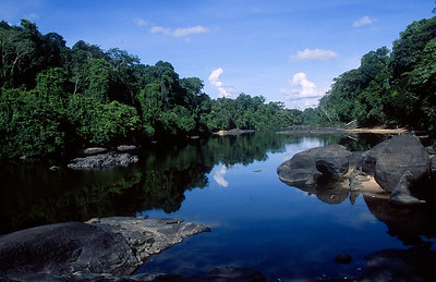 Central Suriname Nature Reserve - Coppename River #2