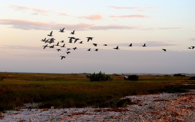 "Flying birds in Isla de Coche, Venezuela For the story, check out: <a href=""http://www.nomadbiba.com/wp/2011/03/isla-de-coche-a-break-from-rutine/"">Isla de Coche, a break from routine</a>"