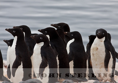 Sterling's Tierra del Fuego to Antarctica