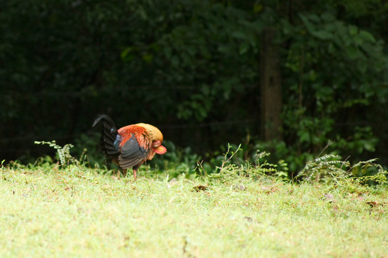 National Bird - Wildfowl