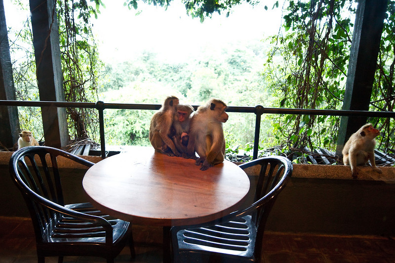 Monkeys watching us every morning