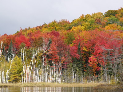 Council Lake in Hiawatha National Forest