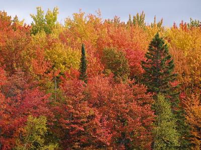Color at Council Lake