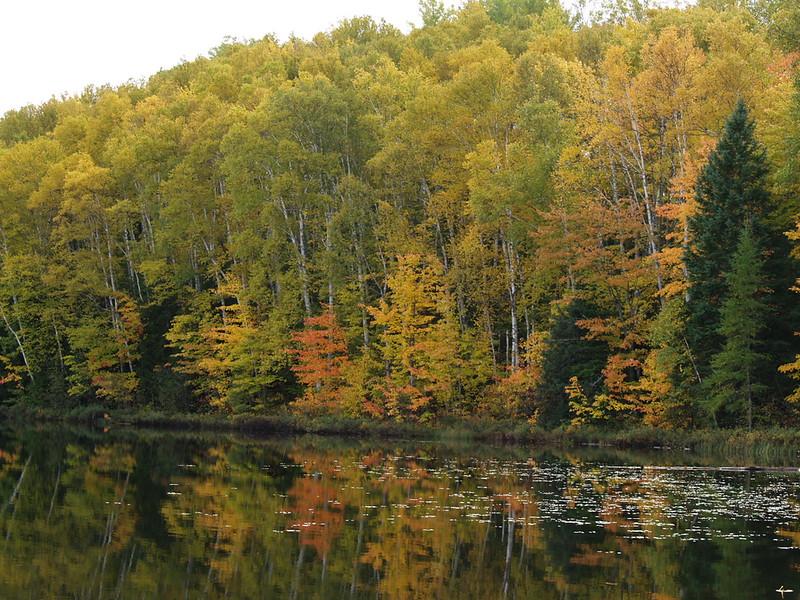 More birch trees at Council Lake