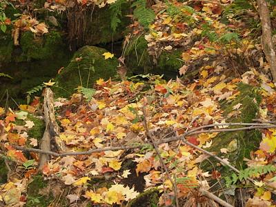 leaf litter against moss-covered rocks in Edison Woods
