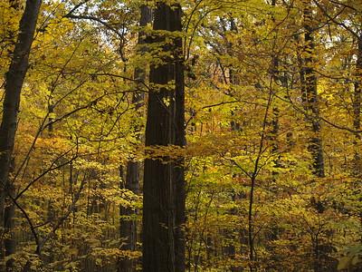 Edison Woods