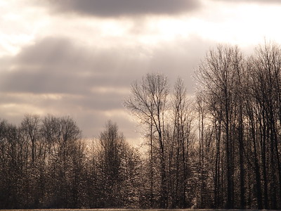 It was tough to get the sun to illuminate the trees because of the clouds. I had to be patient.