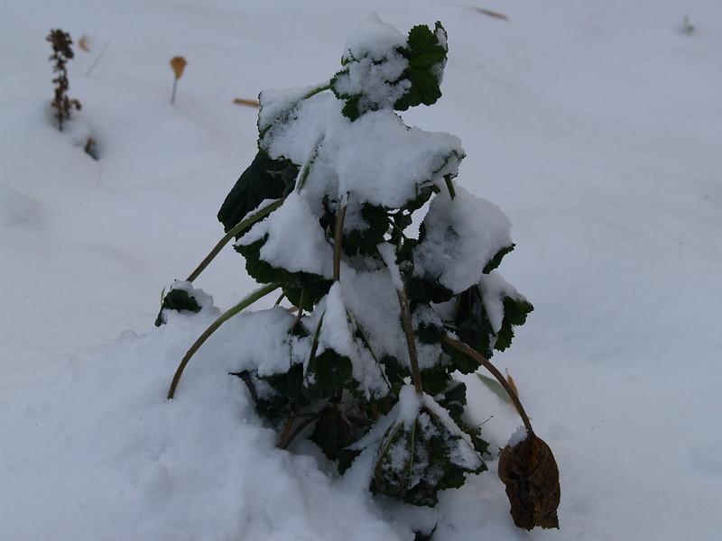 end of the growing season (November 2008)