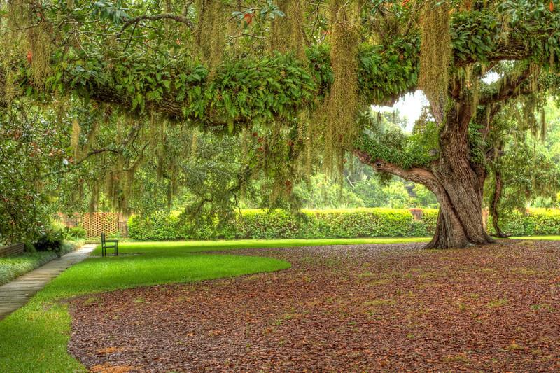 Resting place under a Oak Tree