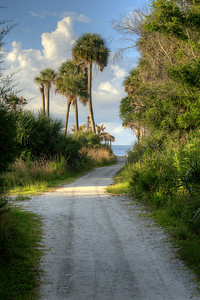The narrow, sandy path leading from the parking area to Deadwood Beach at Botany Bay Plantation Heritage Preserve and Wildlife Management Area in Edisto Beach, SC on Friday, August 29, 2014. Copyright 2014 Jason Barnette