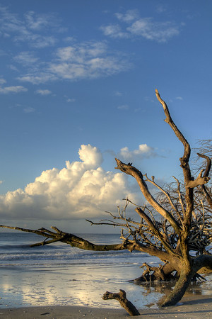 Early morning light on Deadwood Beach at Botany Bay Plantation Heritage Preserve and Wildlife Management Area in Edisto Beach, SC on Friday, August 29, 2014. Copyright 2014 Jason Barnette